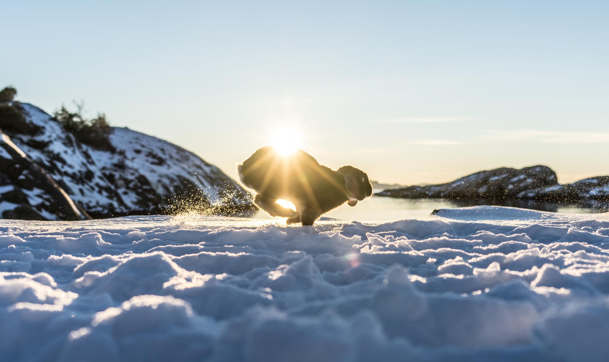 Hase im Schnee